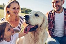 Dog - testimonial image