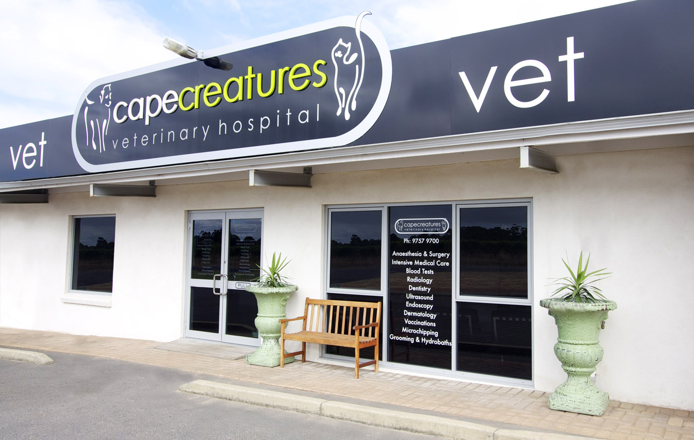 Entrance - Cape Creatures Vet