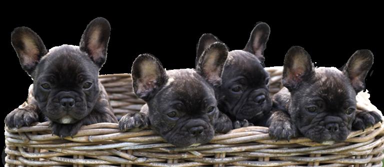 Puppies in basket - Cape Creatures Vet