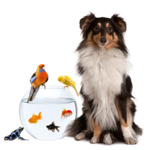 Fish-birds-dog - Cape Creatures Vet